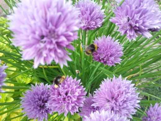 buzzing3