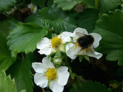buzzing4