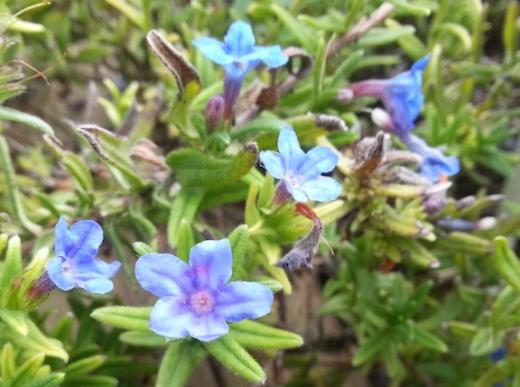 pride-blue