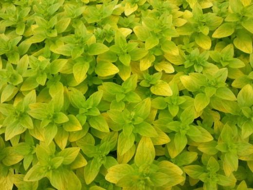 pride-green