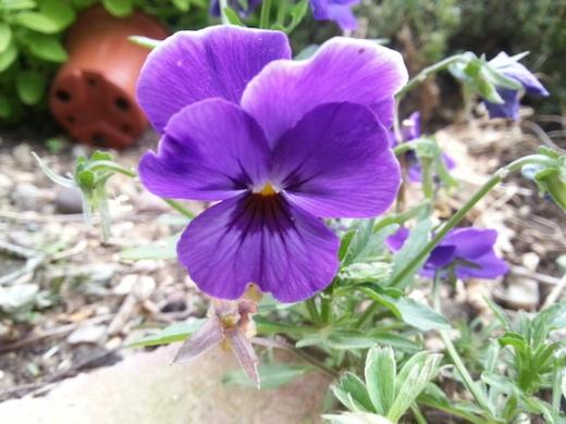 pride-violet