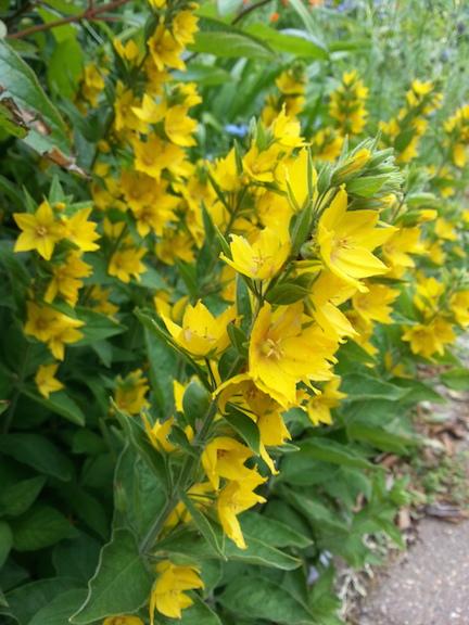 pride-yellow